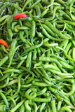 Lot of green chilli peppers Stock Image