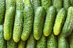 A lot of green cucumbers. Background made from fresh cucumbers Royalty Free Stock Photography