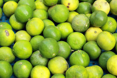 A lot of green lemon. Royalty Free Stock Photography