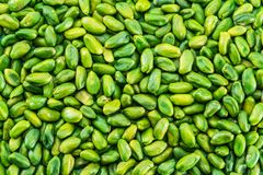 Lot of green pistachio nuts. Food background. stock image
