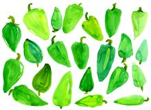 A lot of green sweet pepper. On a white background. Watercolor. Isolated. Template Royalty Free Stock Photography