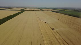 A lot of harvester collect a rich harvest of wheat in the field from high angle drone shot 4K stock footage