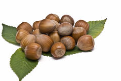 A lot of hazelnuts and leaves. A lot of hazaelnuts with some leaves isolated on a white background stock images