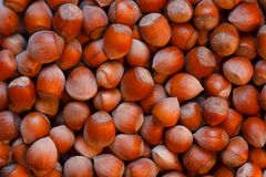 Lot of hazelnuts Stock Photo