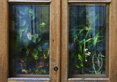 A lot of house plants and flowers behind the wooden country window or door Stock Photography