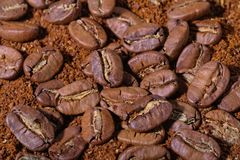 Lot of huge coffee beans and powder. Lot of huge coffee beans on coffee powder Stock Photography