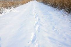 A lot of human tracks leave into the distance on the snow-covered road.  stock photography