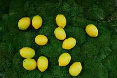 Lot of juicy yellow lemons on the thick green moss golanska Royalty Free Stock Photography