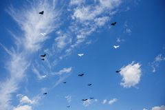 A lot of kites in the blue sky with white clouds stock image