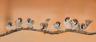 Lot of little funny birds sitting on a branch