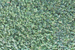 A lot of little leaves as background Royalty Free Stock Photo