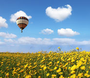 Over the blossoming field of flying a balloon Royalty Free Stock Photos