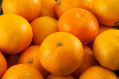 A lot of mandarins or tangerines Royalty Free Stock Image