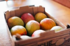 Lot of mango in a rack. Lot of mango tropical fruit in rack box on table Royalty Free Stock Photos