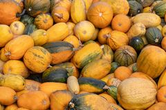 A lot of mini pumpkin at outdoor farmers market.  Stock Photography