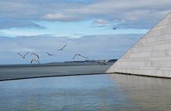 Lot mnodzy frajery na Tago rzece w Lisbon zdjęcie royalty free