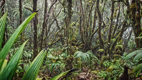 A lot of moisture in the forest. In the Seychelles Royalty Free Stock Images