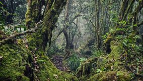A lot of moisture in the forest. In the Seychelles Royalty Free Stock Photography