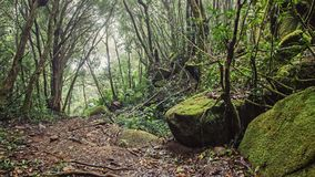 A lot of moisture in the forest. In the Seychelles Royalty Free Stock Photos