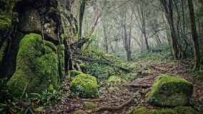 A lot of moisture in the forest. In the Seychelles Stock Images