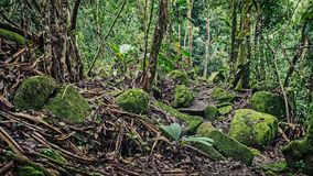 A lot of moisture in the forest. In the Seychelles Royalty Free Stock Photo