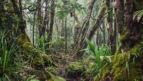 A lot of moisture in the forest. In the Seychelles Stock Image