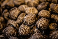 A lot of mushrooms Stock Images