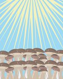 It is a lot of mushrooms under sunshine Stock Photo