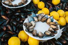 A lot of mussels with lemon on a plate. Sea food. Stock Photos