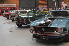A lot of Mustangs Royalty Free Stock Photo