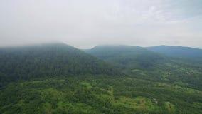 Lot nad góry zakrywa z mgłą Czarodziejskiej zieleni ogródy i drzewa zdjęcie wideo