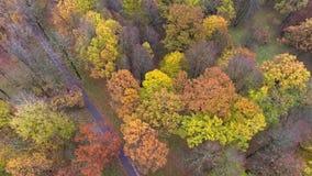 Lot nad jesień parkiem zbiory wideo