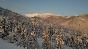 Lot nad kablowym krzesła dźwignięciem, sosnami w halnym ośrodku narciarskim w zimie i Góry z sosnami zakrywać z śniegiem zbiory wideo