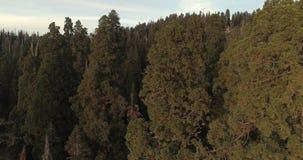 Lot nad sekwoja parkiem narodowym 4K Nov 2017 zbiory wideo
