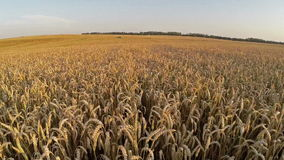 Lot nad uprawy pole przy zmierzchem barwi, powietrzny panoramiczny widok Zdjęcia Royalty Free