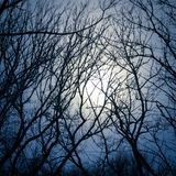 A lot of naked branches of trees against the background of the dark sky and the moon in the fog royalty free stock photo