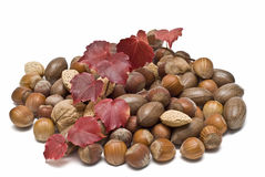 A lot of nuts and an ivy branch. Stock Photo