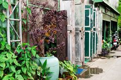 A lot of old wooden colorful doors and pot plant on a street. Chiang Mai, Thailand Royalty Free Stock Photo