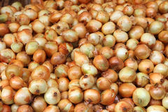Lot of onions Royalty Free Stock Images