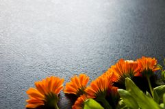 A lot of orange flowers on a dark background Royalty Free Stock Images