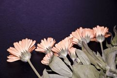 A lot of orange flowers on a black background, Stock Photo