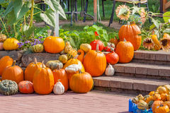 Lot of orange pumpkins Royalty Free Stock Image