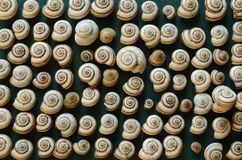 A lot  overland cockleshells arranged in a row Royalty Free Stock Image