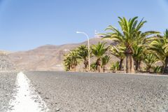 A lot of palm trees next to asphalt road leading to mountainous desert. Fuerteventura royalty free stock images