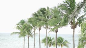 A lot of palm trees and the sea. stock video