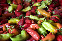 A lot of peppers Stock Image