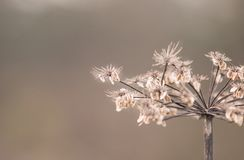 A lot of petal. A lot of dry brown petal Stock Images