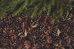 A lot of pine cones with christmas tree. Desigh mockup. A lot of pine cones with christmas tree Stock Images