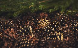 A lot of pine cones with christmas tree. Desigh mockup. A lot of pine cones with christmas tree Stock Photo