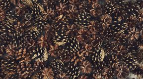 A lot of pine cones. Design mockup. A lot of pine cones Royalty Free Stock Photo